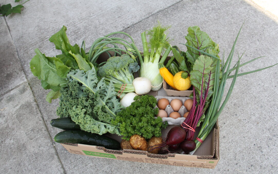 Good Food Boxes are 100% Local!